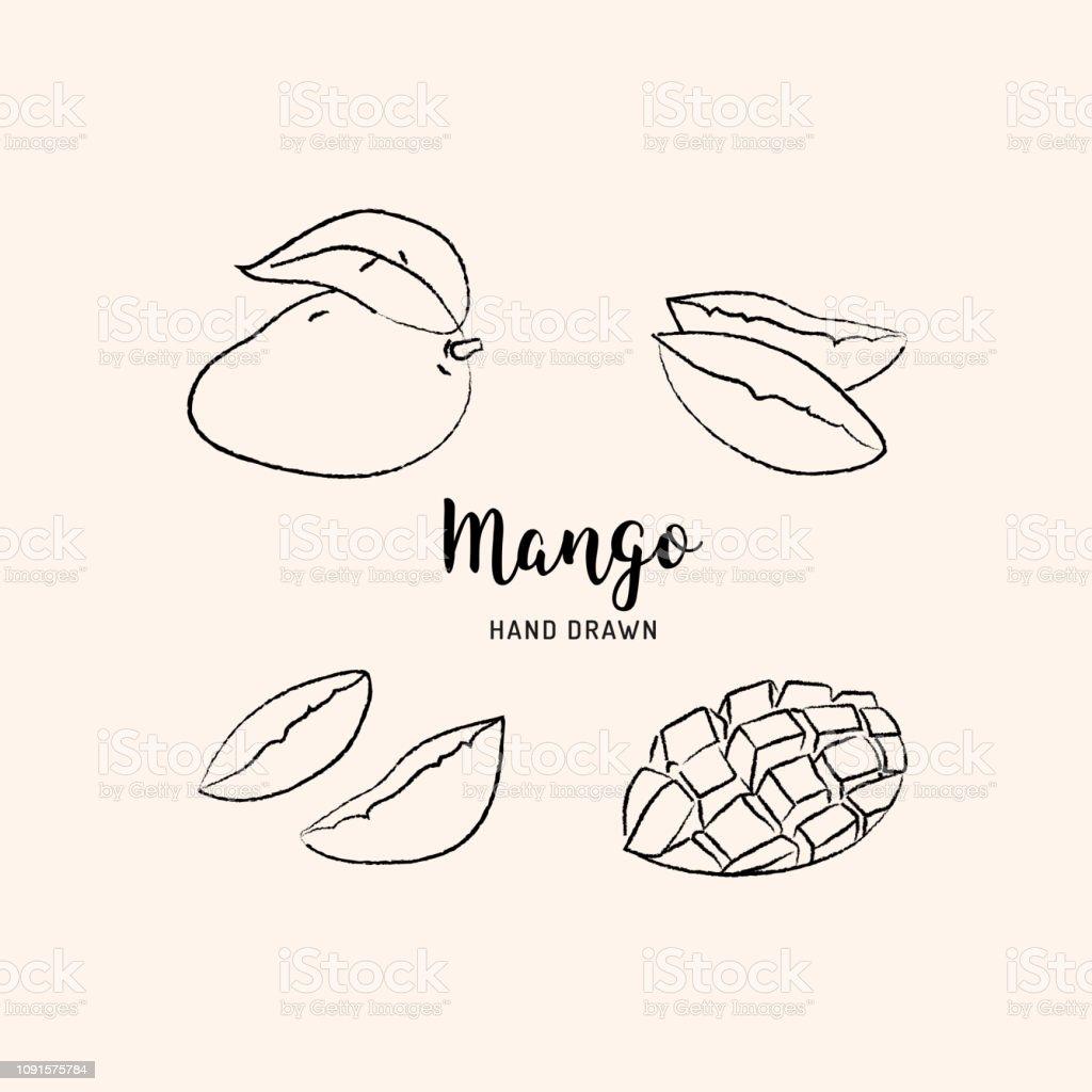 Mango fruit drawing vector hand drawn mango sketch of mango on white background vector