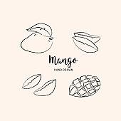Mango fruit drawing Vector hand drawn mango. Sketch of mango on white background, Vector isolated icons set