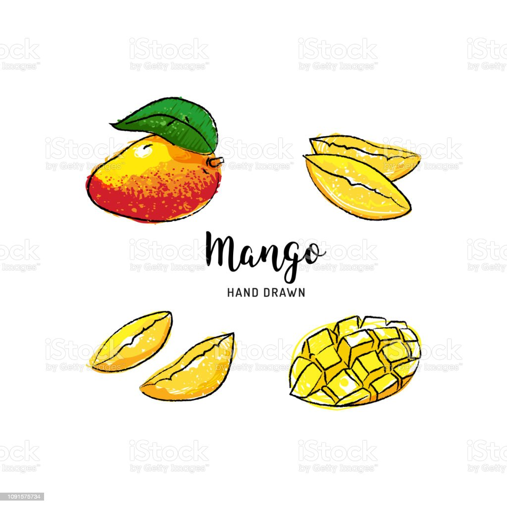 Vetores De Fruta Da Manga Desenho Vetorial Mao Desenhada Manga