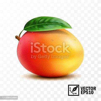 Mango fruit with leaf on the handle ,3D realistic isolated vector, editable handmade mesh