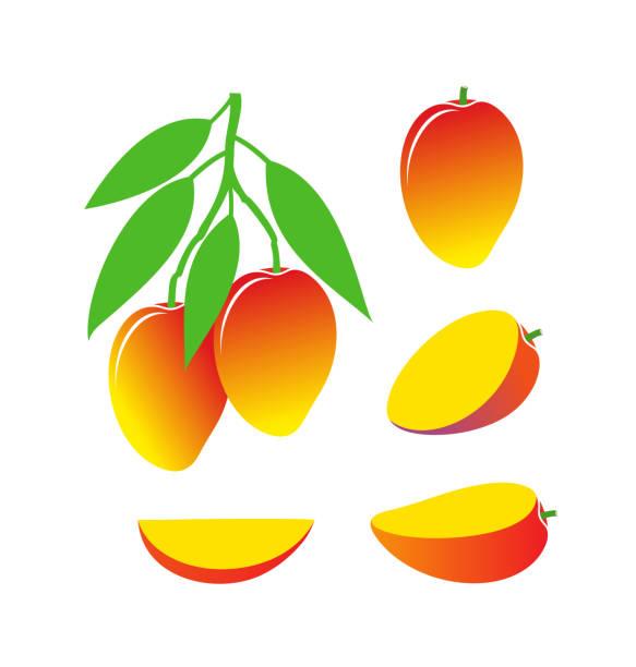 Mango logo. Isolated mango on white background EPS 10. Vector illustration avocado silhouettes stock illustrations