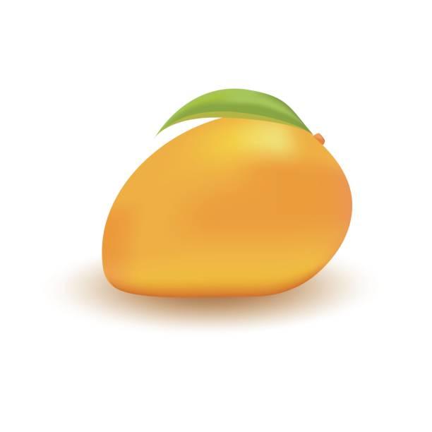 ilustraciones, imágenes clip art, dibujos animados e iconos de stock de mango sobre un fondo blanco - mango