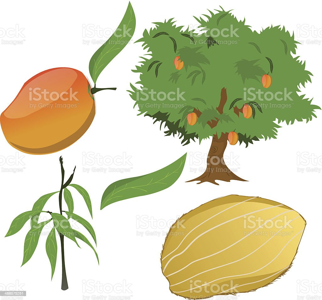 Mango Tree Stock Vector Art & More Images of Branch - Plant Part ...