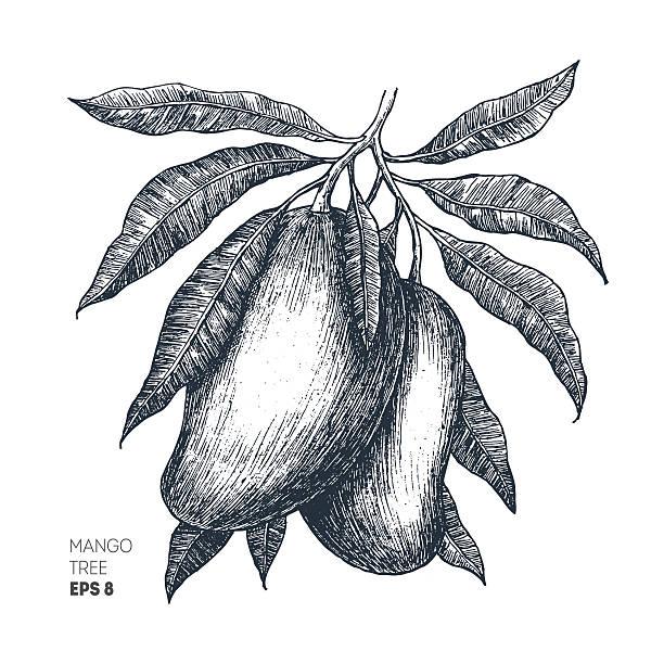 Royalty Free Mango Tree Clip Art, Vector Images ...