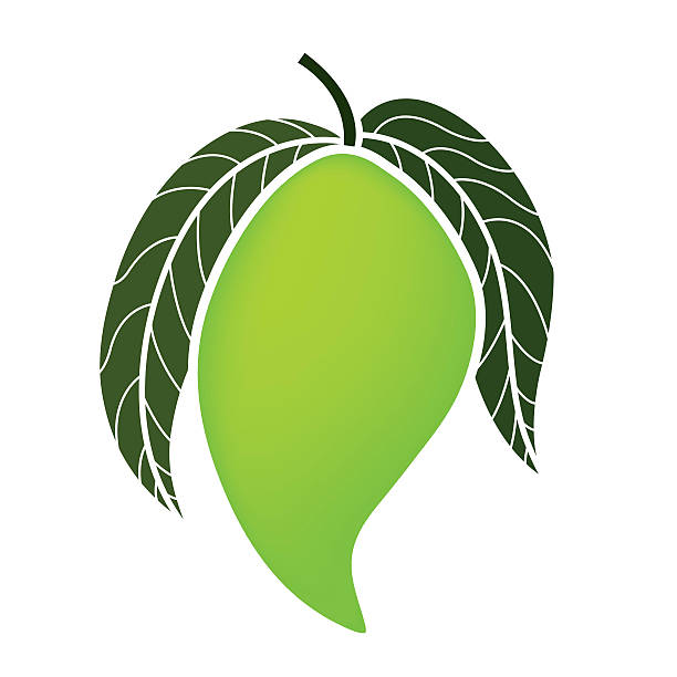 Best Green Mango Illustrations, Royalty-Free Vector ...