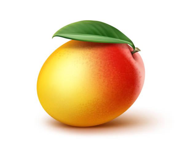 ilustraciones, imágenes clip art, dibujos animados e iconos de stock de mango con hoja - mango