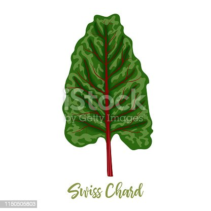 Mangold or Swiss chard Rainbow leaves isolated. silver beet, Food concept. Fresh juicy raw cabbage. Healthy diet, vegetarian, spring vegetables, seasonings vector illustration organic salads