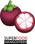 Mangosteen vector icon. Healthy detox natural product superfood illustration for design market menu superfood .