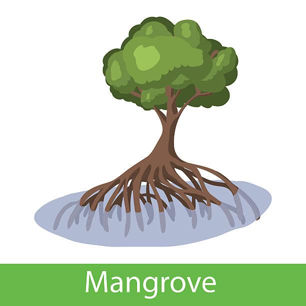 Mangrove cartoon-Baum – Vektorgrafik