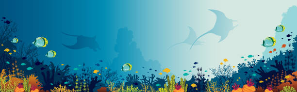 Mantas, coral reef, underwater sea. Silhouette of mantas, coral reef and fishes on a blue sea background. Underwater marine life. Vector panoramic illustration. underwater stock illustrations