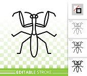 mantis (Mantis religiosa) isolated on a white background