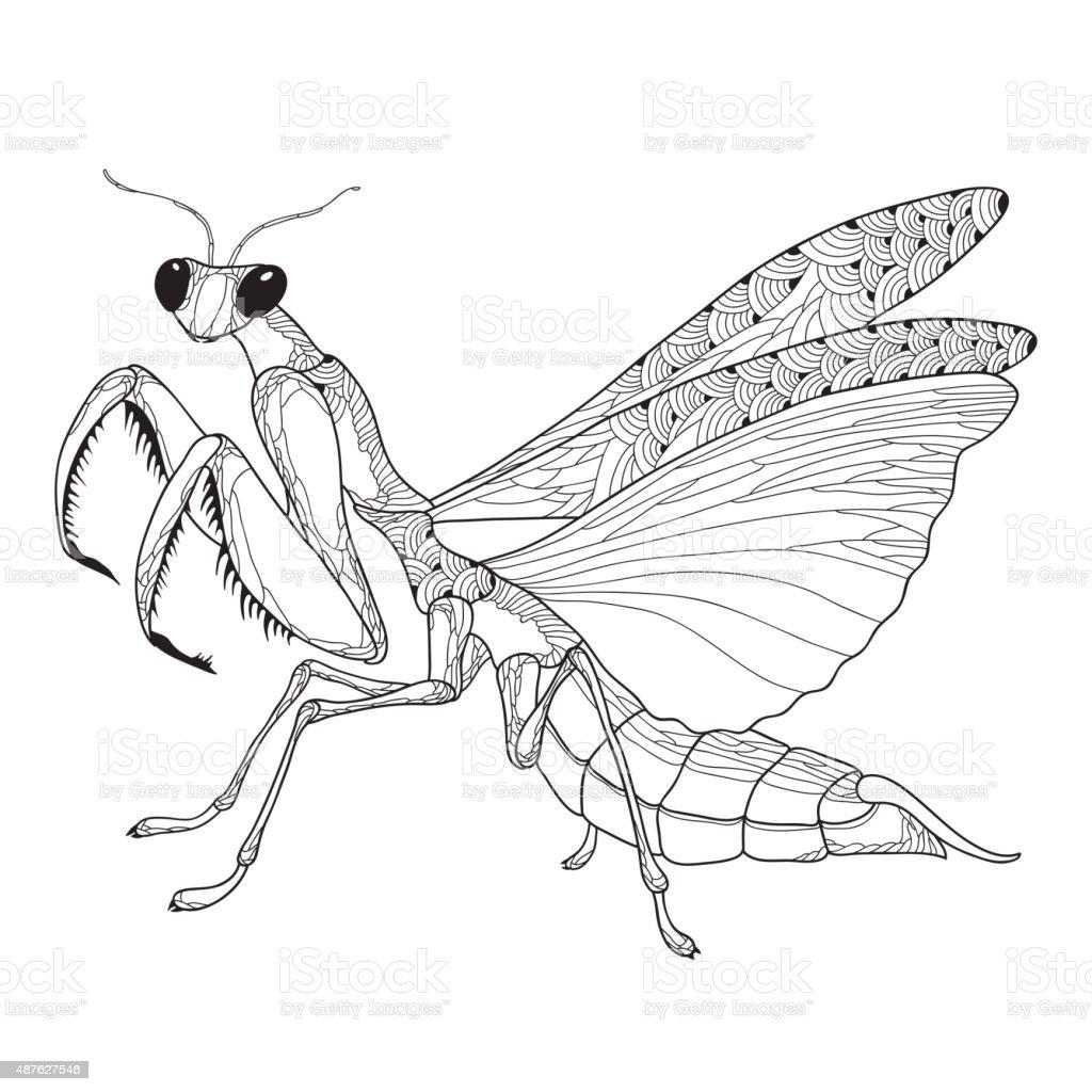 Mantis Religiosa Or Praying Mantis Isolated On The White Background ...