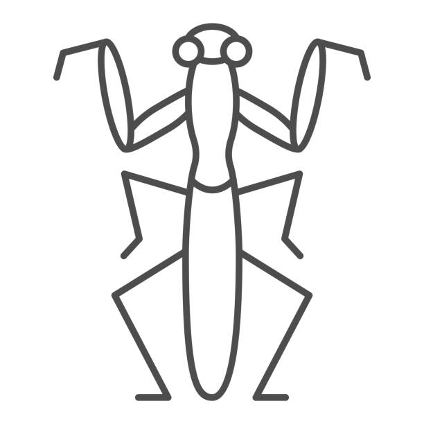 Mantis thin line icon, Insects concept, Beetle sign on white background, praying mantis icon in outline style for mobile concept and web design. Vector graphics. Mantis thin line icon, Insects concept, Beetle sign on white background, praying mantis icon in outline style for mobile concept and web design. Vector graphics macrophotography stock illustrations