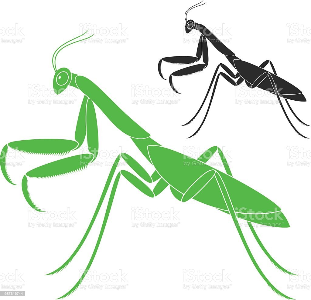 royalty free praying mantis clip art vector images illustrations rh istockphoto com cute praying mantis clipart