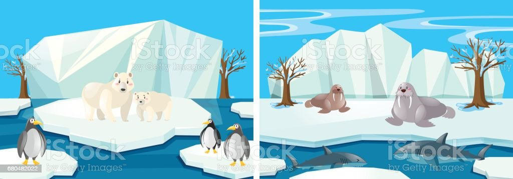 Many animals in the north pole vector art illustration