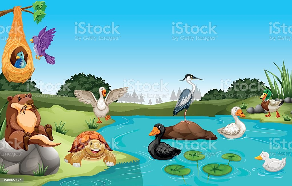 Many animals living by the pond stock vector art more for Pond animals