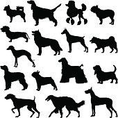 Many dogs silhouette