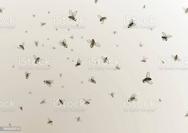 Many large and small black flies on a tan background vector id164545315?b=1&k=6&m=164545315&s=612x612&h=kgkypvl36jes35zbhypx3lgmbokxkhxamidrd8pc4gs=