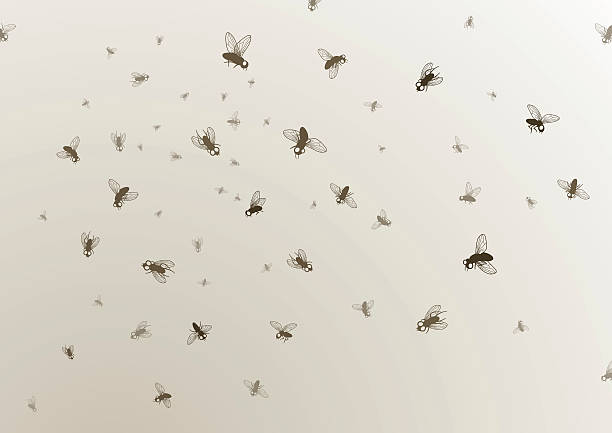 Many large and small black flies on a tan background horde of flies fly insect stock illustrations
