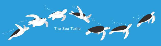 Many Sea Turtle swimming in the sea,  vector Sea Turtle swimming in the sea, a lot of swimming postures, swimming track turtle stock illustrations
