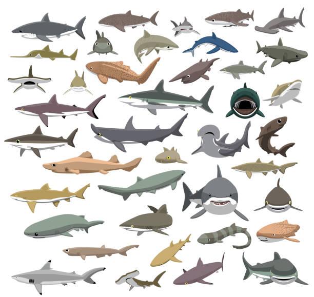 many sharks species of the world cute cartoon vector - living organism stock illustrations