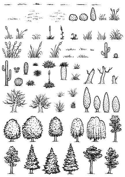 illustrations, cliparts, dessins animés et icônes de illustration des éléments, dessin, gravure, encre, dessin au trait, vecteur de carte - plante sauvage