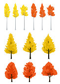 Maple and ginkgo and Aspen tree autumn leaves illustration set