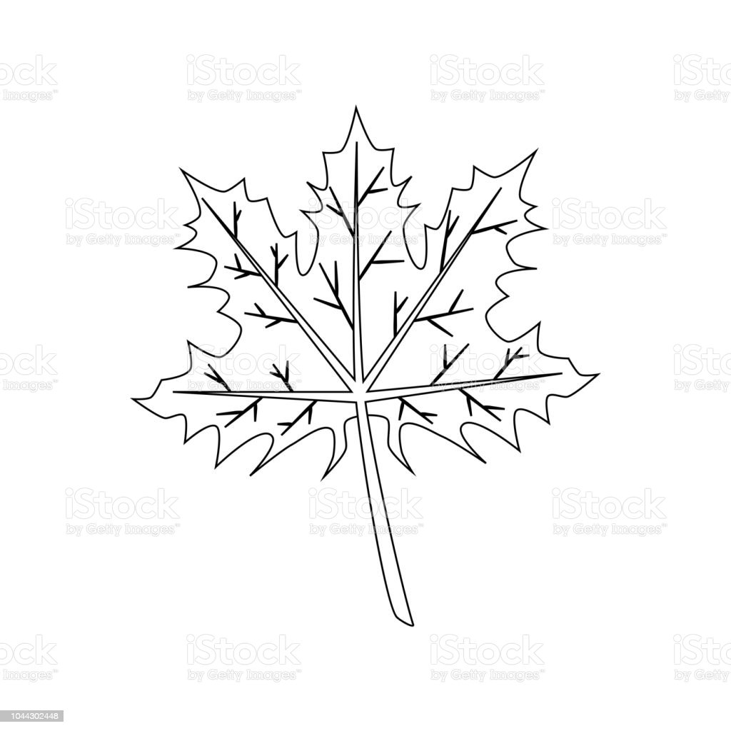 - Maple Leaf Coloring Page Stock Illustration - Download Image Now