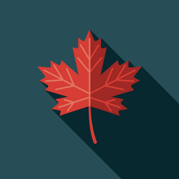 Maple Leaf Flat Design Canadian Icon with Side Shadow A pastel colored flat design Canadian icon with a long side shadow. Color swatches are global so it's easy to edit and change the colors. maple leaf stock illustrations