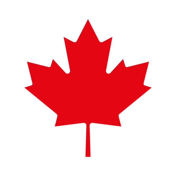 ikona liścia klonu. symbol kanadyjski. ilustracja wektorowa. - kanada stock illustrations