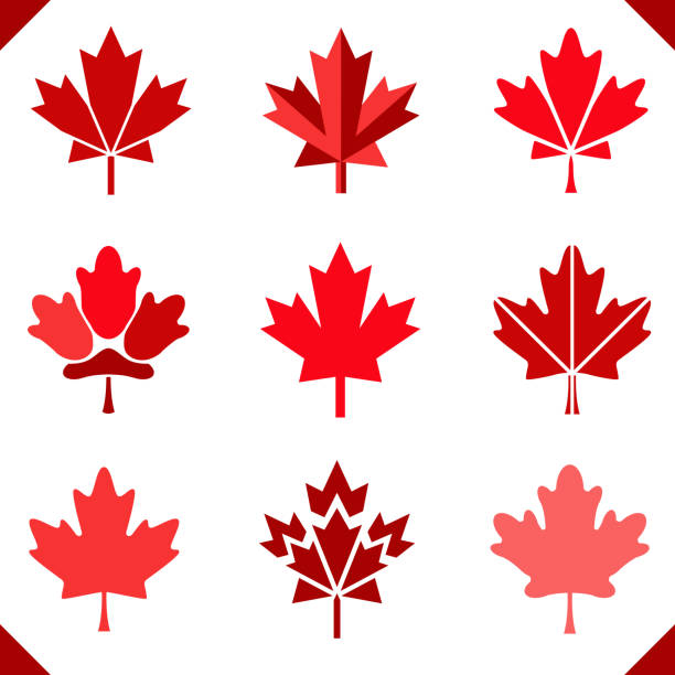 Maple leaf icon in red for Canada flag set of leaves Maple leaf icon in red for Canada flag set of leaves grouped easy to color maple leaf stock illustrations