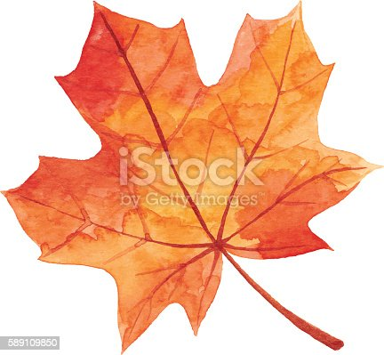 istock Maple Leaf in Autumn - Watercolor 589109850