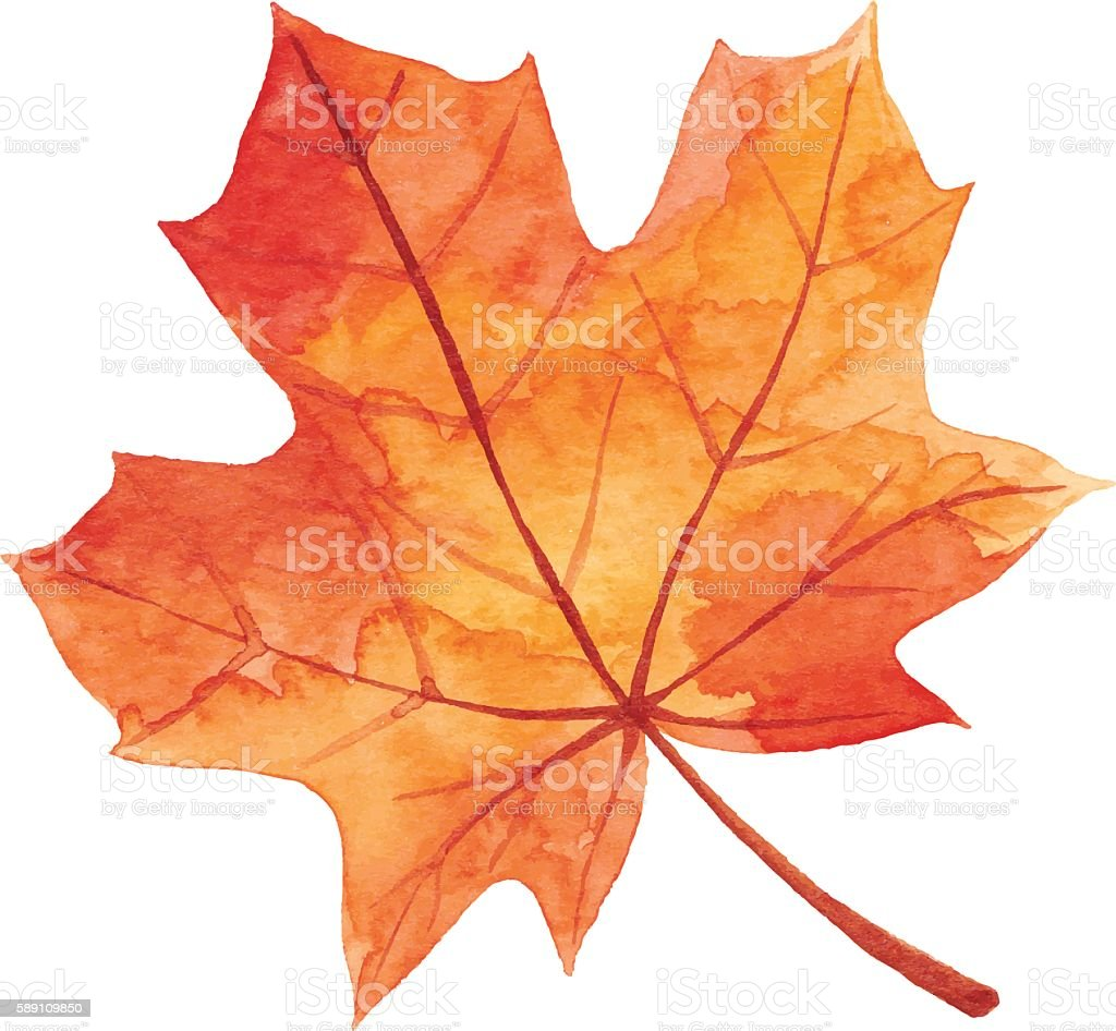 Maple Leaf in Autumn - Watercolor vector art illustration
