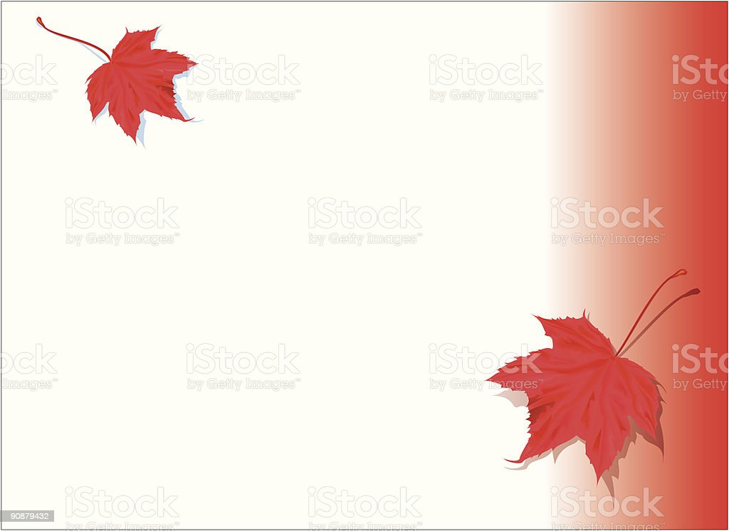 Maple Leaf on a simple background royalty-free stock vector art