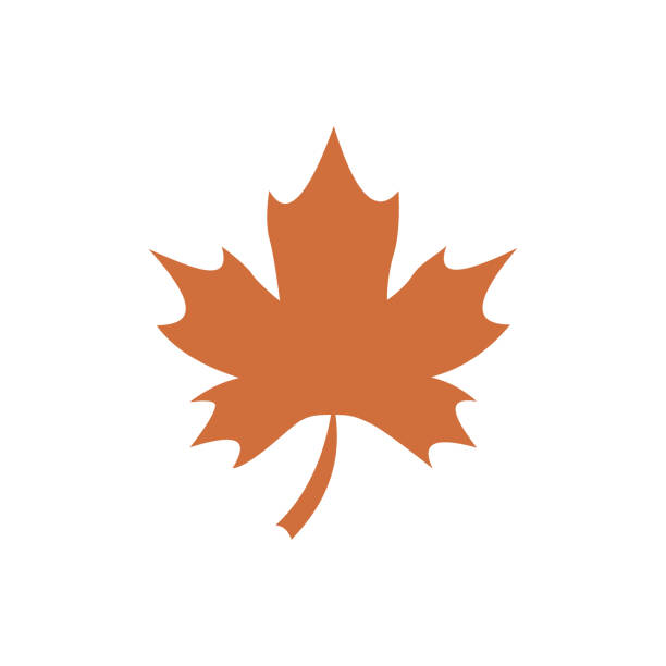 Maple leaf thanksgiving holidays flat icon vector This is holidays flat icon maple leaf stock illustrations