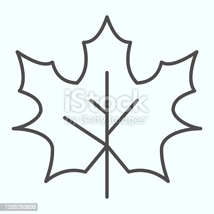 Maple leaf thin line icon. Canada forest tree leaves shape sign. Autumn season vector design concept, outline style pictogram on white background, use for web and app. Eps 10