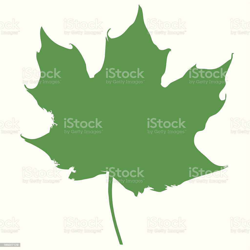 Maple Leaf royalty-free maple leaf stock vector art & more images of autumn