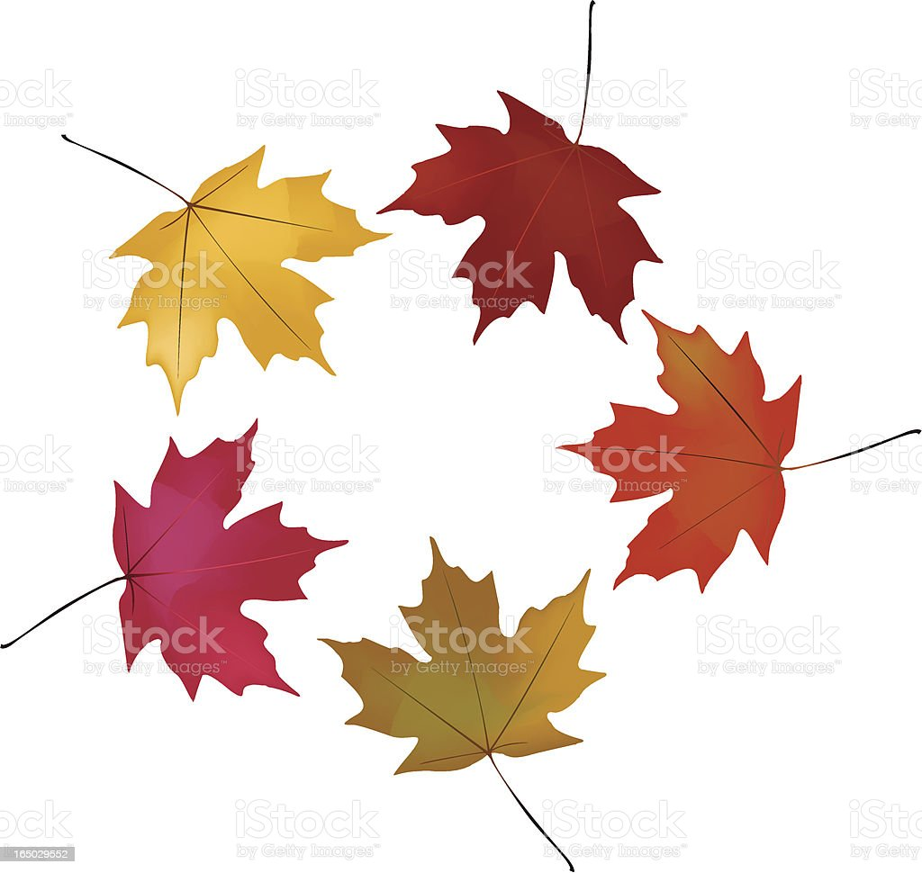 Maple Leaf Stock Vector Art & More Images of Autumn ...