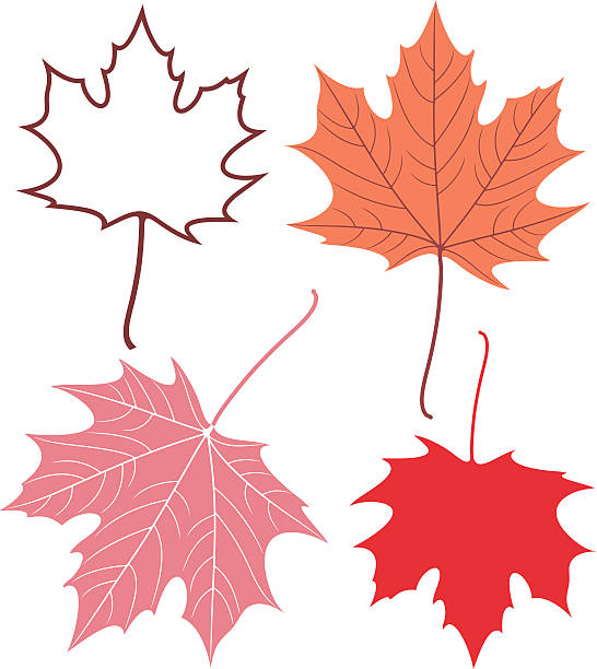 Maple leaf eps maple leaf stock illustrations