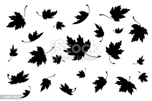 Maple leaves. Autumn background template with flying and falling leaves. Black silhouette. Isolated. Vector