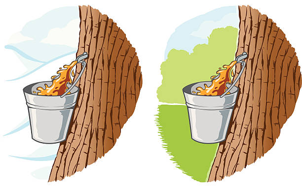 Maple syrup Maple sap being collected maple syrup stock illustrations