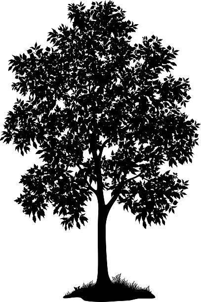 klon i trawy, sylwetki - gałąź część rośliny stock illustrations