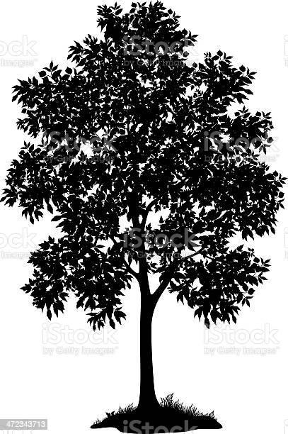 Maple Tree And Grass Silhouette Stockvectorkunst en meer beelden van Biologisch