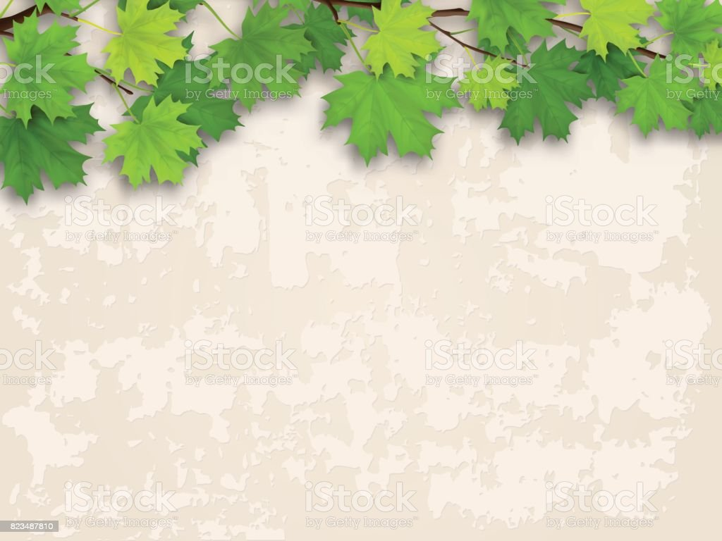 maple tree branch green on old wall background vector art illustration