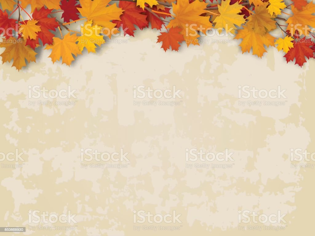 Maple tree branch on old wall background vector art illustration