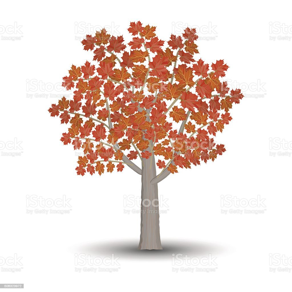 maple tree isolated on white background. vector art illustration