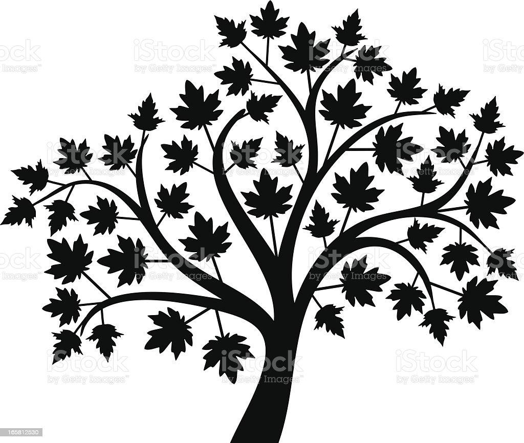 Maple royalty-free stock vector art