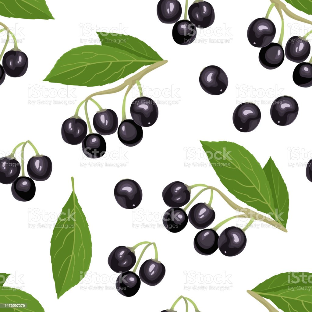 Maqui Berry Seamless Pattern On White Background Branch Of Fresh
