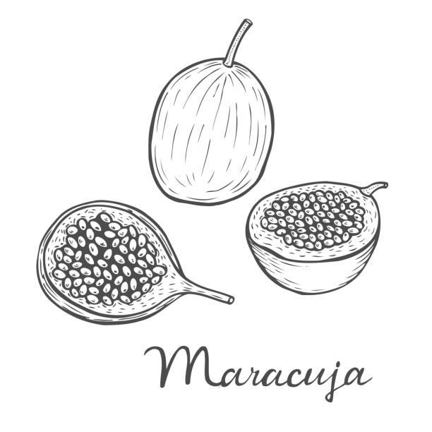 illustrazioni stock, clip art, cartoni animati e icone di tendenza di maracuja passion fruit - illustrazioni di passiflora