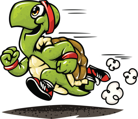 marathon turtle